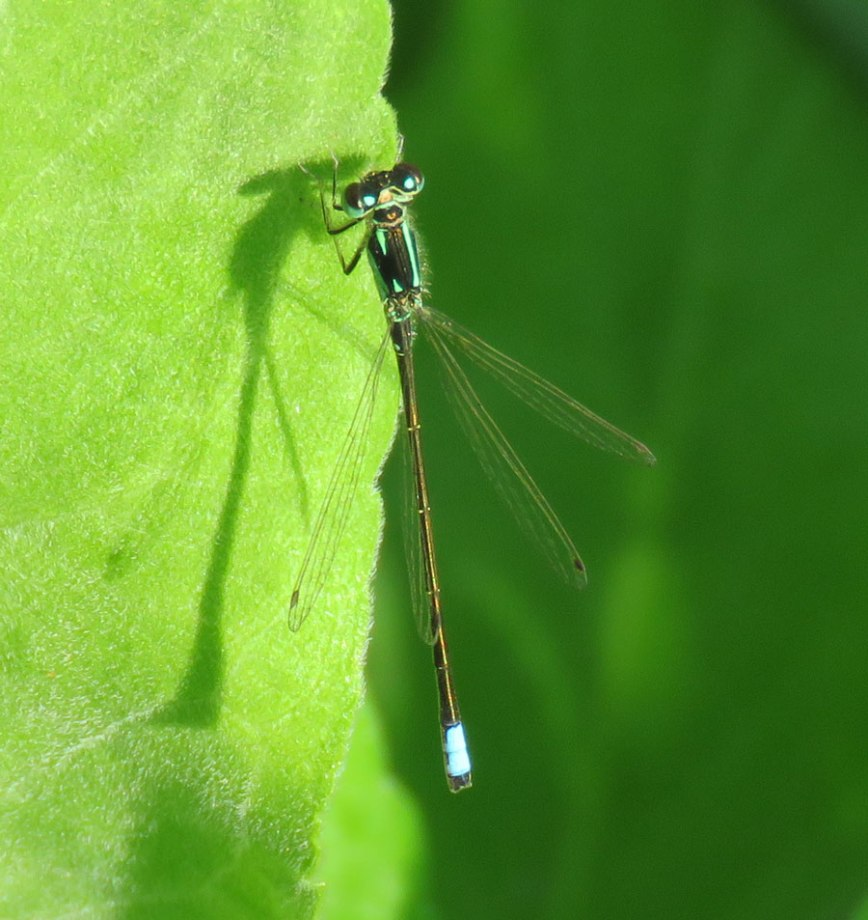 c-spreadwing16-06-05_4121
