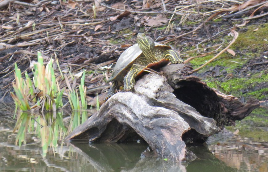 doug-turtle-16-03-14_9386