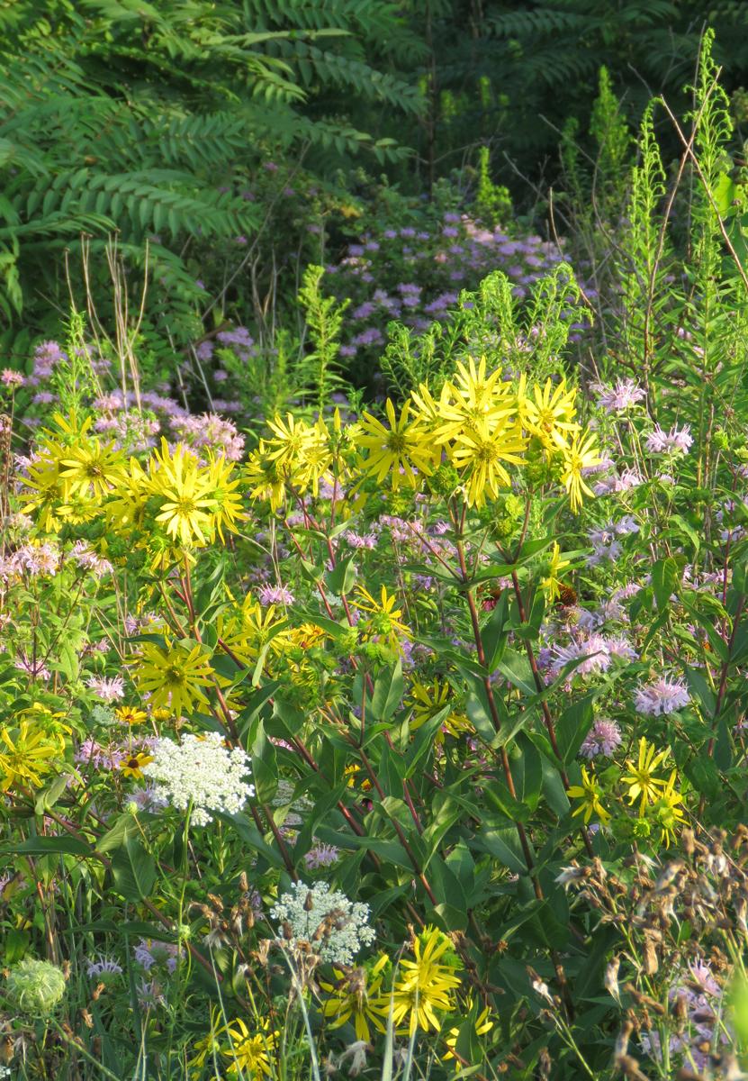 meadow16-07-31_7505