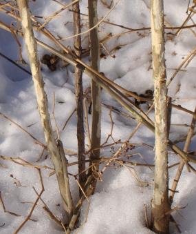 rabbitstripped15-01-17_1647