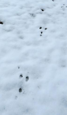 rabbittracks16-12-06_5646