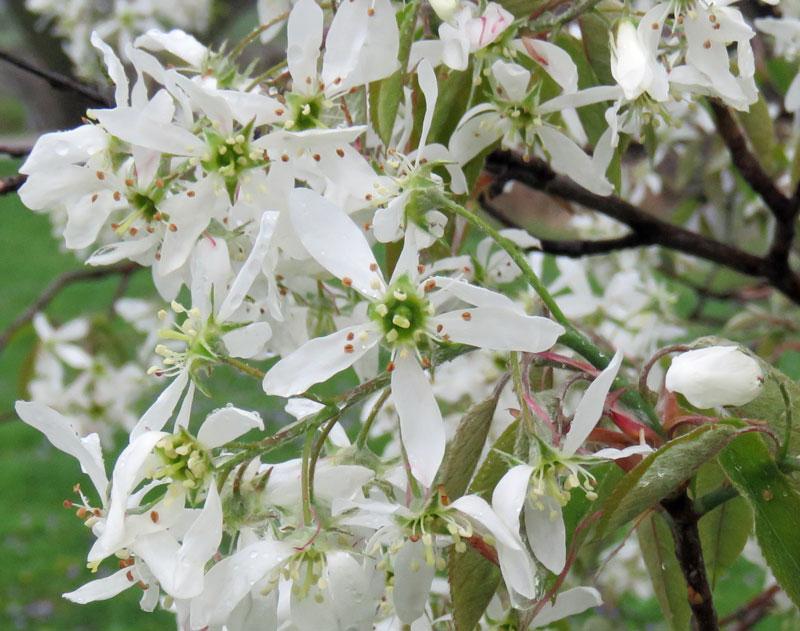 servflowers16-04-21_1398