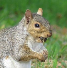squirrel16-10-29_2978