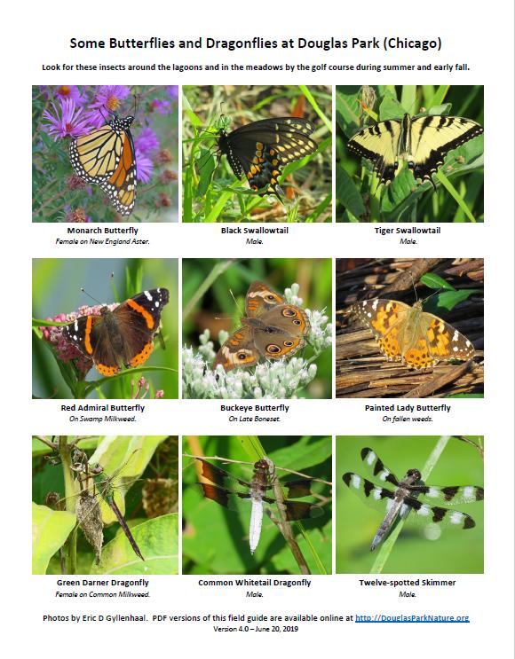 ButterfliesDragonfliesDouglas